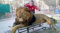 一游客不顾警告伸手摸母狮手臂被咬致感染性休克