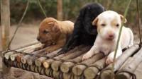 为狗狗们准备的庇护所,爱心小哥亲手打造