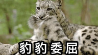 """爆笑!动物园惊现豹子和小朋友""""打架"""",豹子:本王是因为无聊!"""