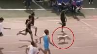 流浪狗误入百米赛跑喜提季军 网友:它还跟着上课