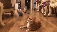 这么多猫咪,你到底喜欢哪只小可爱?