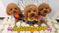 3只狗狗被100个纸杯封印,只有狗妈妈成功突围,还怒撕杯子!