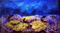 全球变暖, 相当于人体体温上升到40°, 珊瑚开始白化, 死亡。
