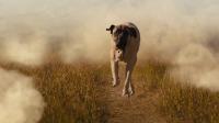暖化了!《一条狗的使命2》最治愈片段,贝利伊森麦田重逢