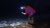 老四凌晨4点到海边猎鱼,鱼还在睡梦中,就被老四用钢叉带走