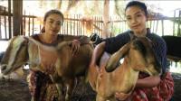 东南亚三姐妹,野外用这种方法烤羊肉,味道鲜嫩无比!