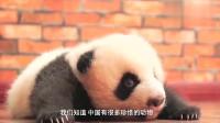 有一种比大熊猫还珍贵的国宝, 就在秦岭, 全世界仅存一只!