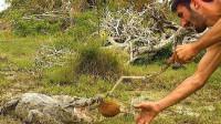鳄鱼能咬碎椰子吗?作死老外往鳄鱼嘴里塞了一个,结果发生了什么?