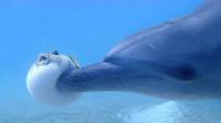 河豚一遇险就鼓成球,却被海豚发现,接下来的事太伤自尊了!