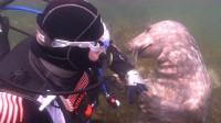 男子潜水偶遇海豹,拉着他的手不松,直到一举动才明白它小心思!