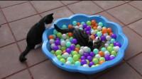 嘴角疯狂上扬!猫咪们这都是什么奇奇怪怪的姿势啊!