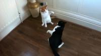 猫咪打起架来太狠了,仿佛武林高手对决一样,太逗了!