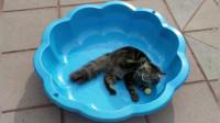 小猫咪被困在盆子里,只好自娱自乐,肆意卖萌了