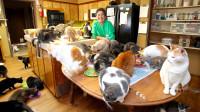 养很多猫是一种怎样的体验?一躺在沙发,就有一张20公斤猫毯出现