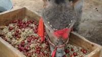 别说吃驴肉了 现在连驴饲料都吃不起了 真心活得不如头驴啊!