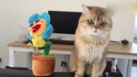 猫咪:让你嘚瑟!让你扭来扭去!