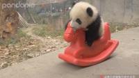 大熊猫考驾照,无师自通