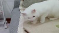 猫咪闻了一下螺蛳粉,这个反应我笑喷了
