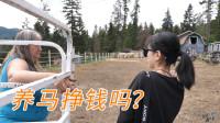 加拿大13集:农庄女主人:养马不赚钱,它们是我的家人