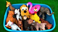 陆地动物玩具展示