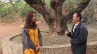 """村民保护千年的古桑树,如今已成当地的""""王"""",这是怎么回事呢?"""