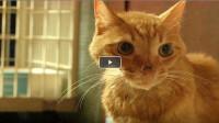 橘猫被主人抛弃后开始绝食,生生将自己饿成了纸片猫,好心疼