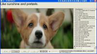 祺晋英语口语《一条狗的使命》高清片断(4)