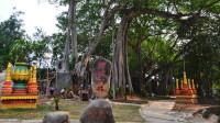 云南与缅甸交界有个地方,一棵树撑起一个景点,门票15元,值不值