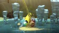 爆笑虫子:两个活宝虫子也太会耍了,看得我笑到岔气了!