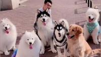养这么多狗狗,每天带出来喝西北风!