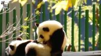 熊猫村的Vlog