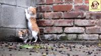 流浪小猫被妈妈遗弃,叫声听着让人心疼!