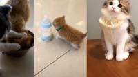 对于抢食物的同伴,这只猫咪的做法有点狠
