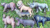 认识骆驼等8种陆地动物,小马识动物