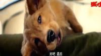 《一条狗的使命2》已上映,回顾一条狗的使命:等待三生三世,只为遇见你