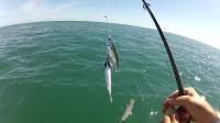 露营 旅行 捕鱼-丛林捕鱼-捕捉和烹调新鲜的鱼