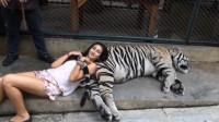 国外美女和老虎拍照合影,不料意外发生,镜头还原全过程!