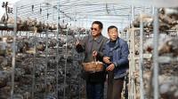 陕西陇县:农村产权制度改革促增收