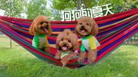 3只狗在吊床上嗨翻了,这才是夏天的正确打开方式!
