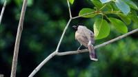 十二星座最喜欢哪种小鸟,自由飞翔吧!