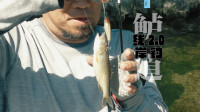 鲈道:线2.0 岸钓