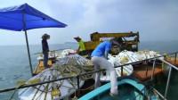 工作时的意外收获,小伙在造珊瑚礁时发现了极品美味石斑鱼!