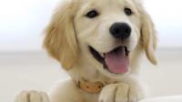 12星座训练狗狗的方法有什么?狮子座会释放它们自由的天性!
