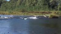 渔民捕鱼:水里到处乱串的大鱼,这速度甚比鱼雷