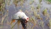 小河塘该如何抓到鱼?你得需要一个捕鱼利器