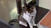 猫咪坐在门口发呆突然下雨了,金毛就像大哥哥一样把它拎回去