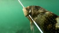 赶海捡到只大海星,外加两条鱼,捡到稀货就得揣起来!