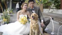 做为家庭中的一员,主人的婚礼上怎么能没有狗狗的身影呢?