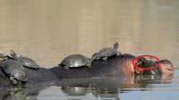 女子河边发现一群乌龟,掏出手机拍照,看清后手机丢掉撒腿就跑