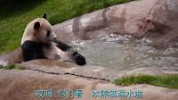 水深不过半米,大熊猫却以为自己溺水了,网友:欠你一个奥斯卡奖杯!